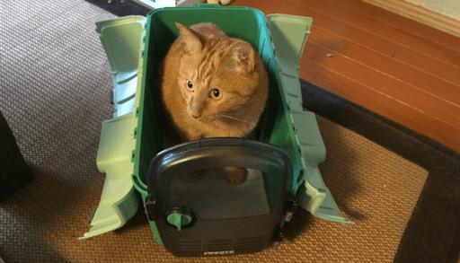 猫キャリーケースに入るチョビ