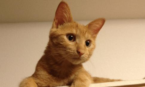 えっ!もう大人!ー子猫の年齢を人間に換算すると何歳?