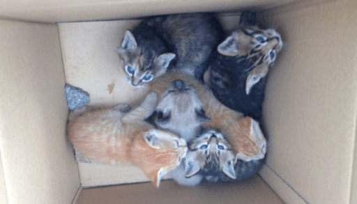 猫と出会う7つの方法ー野良・捨て猫を拾う
