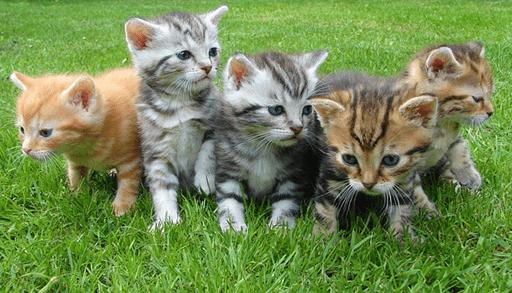 猫と出会う7つの方法ーブリダ―から購入する