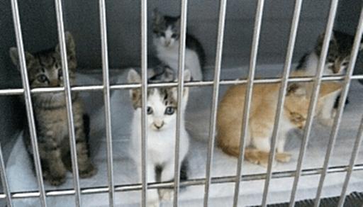 猫と出会う7つの方法ー保健所や動物センターの譲渡会で引き取る