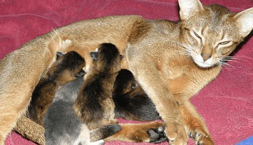 猫と出会う7つの方法ー知人から譲り受ける