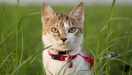 猫の首輪には鈴を付けるの?