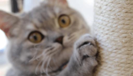 猫の爪とぎ5つの対処法