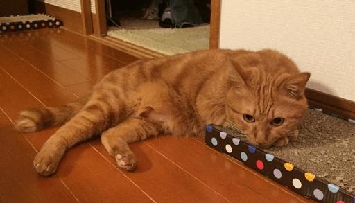 愛猫の好みに合わせて爪とぎ器を設置する