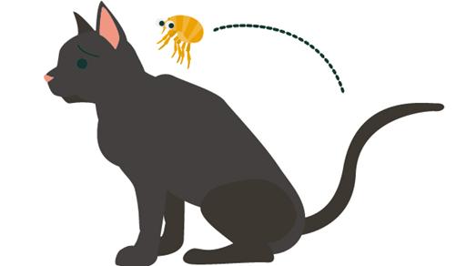 愛猫がノミに寄生されていませんか?