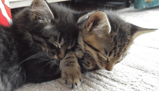 兄弟猫達と一緒に過ごす