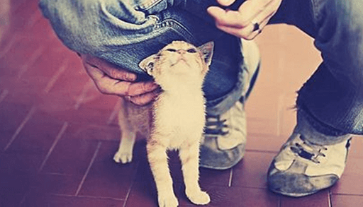 人なつっこい猫になって欲しいなら・・