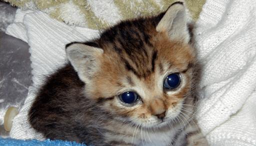 猫の「社会化期」とは?