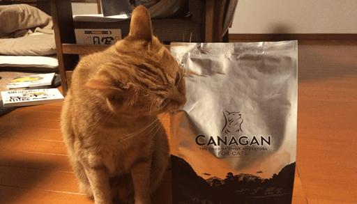 カナガンキャットフードに噛みつくチョビ
