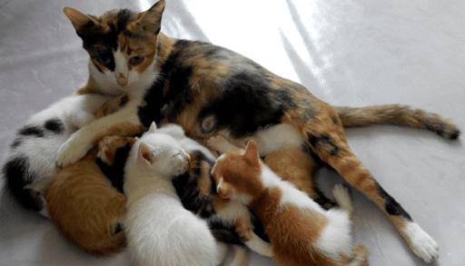 母猫に育ててもらう