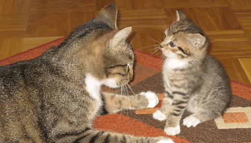 猫の性格決定にとって大事な時期は?