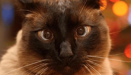 猫の性格決定のしくみーまとめ