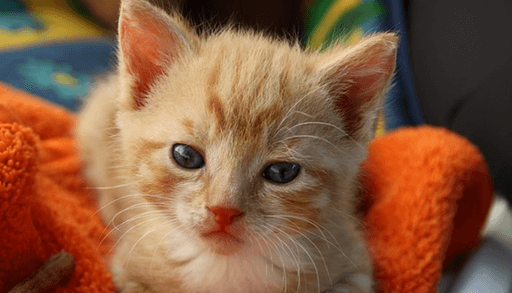 幼児期(生後6週?1年)の子猫に必要なお世話は?
