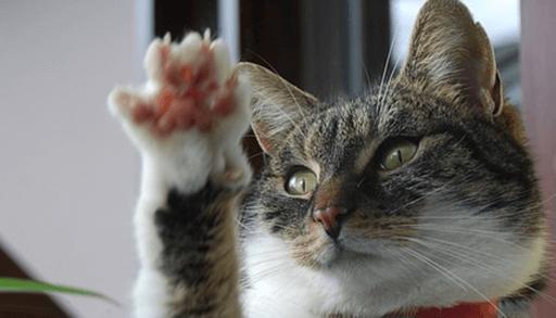 家具などを猫の爪とぎから守る対処法ーまとめ