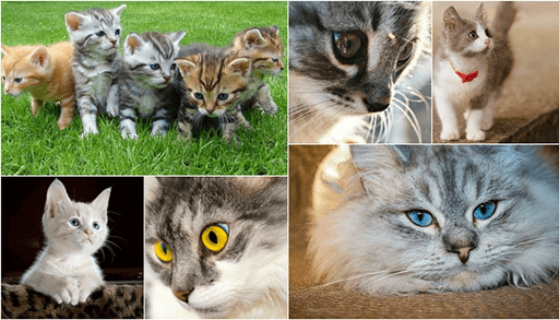 猫の性格はどうやって決まるの?