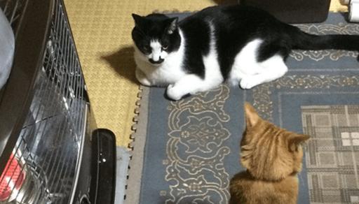 猫が冬場に起こしやすい事故