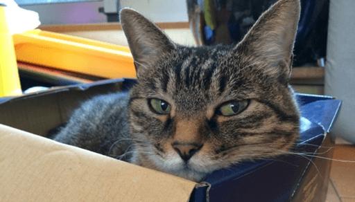 猫のストレスの原因と対処法ーまとめ