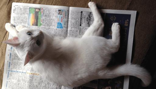 冬は猫の粗相が増える季節