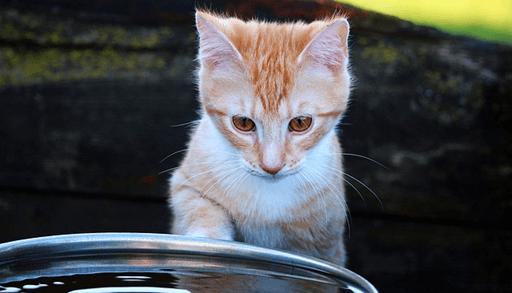 愛猫が水を飲む機会を増やす方法