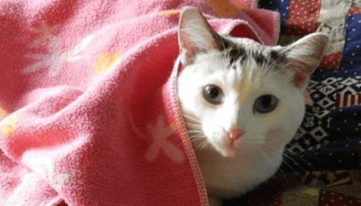 冬場に増える猫の病気や事故は?