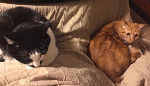 猫の多頭飼いを始める時に注意したい事ーまとめ