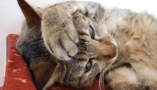 猫の「噛み癖」6つの理由と予防法ーまとめ