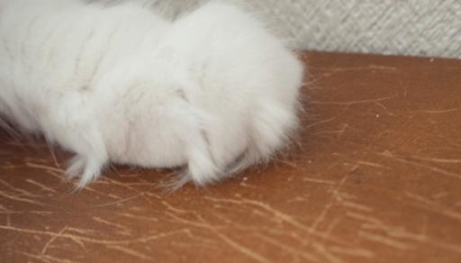 猫から感染しやすい人獣共通感染症