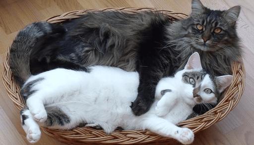 猫の多頭飼いを成功させるコツ