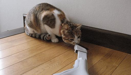 愛猫を掃除機に慣れさせる方法