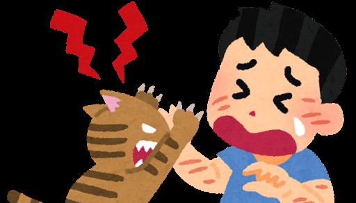 猫が噛む理由と予防法