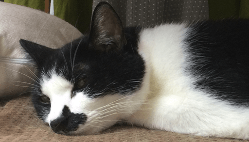 猫白血病ウイルス感染症ってどんな病気がご存知ですか?