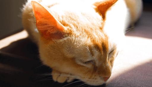 晴れと猫の行動