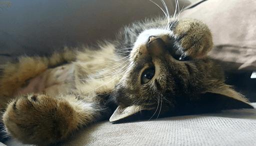 ステップ3 猫にストレスを感じさせない