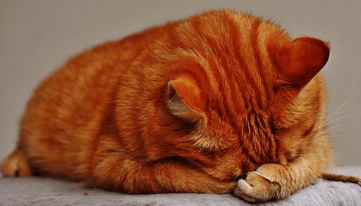 雨と猫の行動