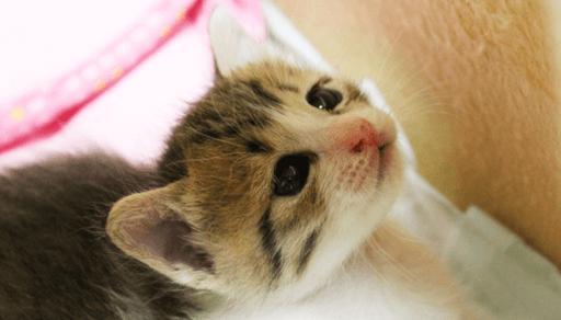 猫のしつけに大切な時期