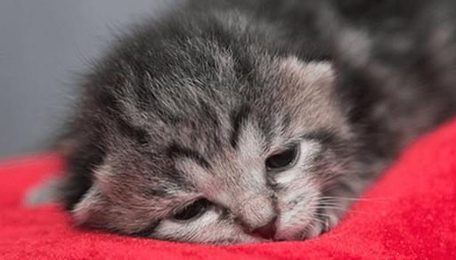 猫カゼの症状・予防・治療法ーまとめ
