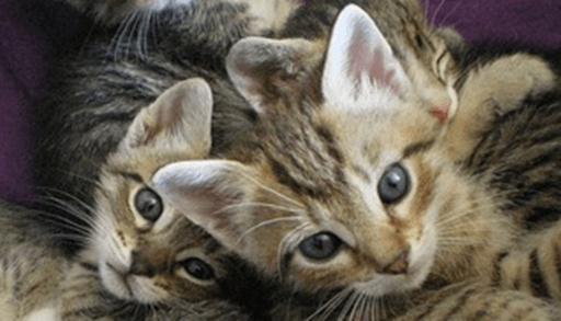 子猫の健康で長生きの秘訣と注意点ーまとめ