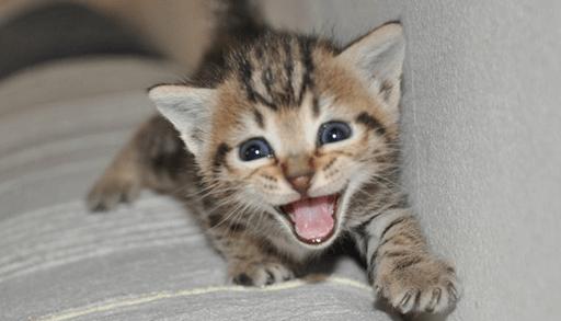 我家の愛猫2匹の「しつけ」の検証結果を比べると、猫の好みなどの個体差によって同じ手順で「しつけ」を行っても結果が変わってしまう事が分かっていただけたのでは  ...