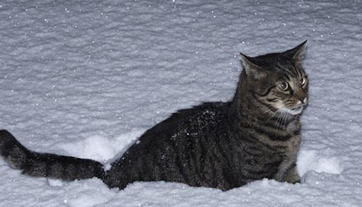 雪と猫の行動
