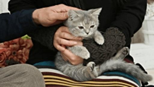 撫でられて微妙な顔をする猫
