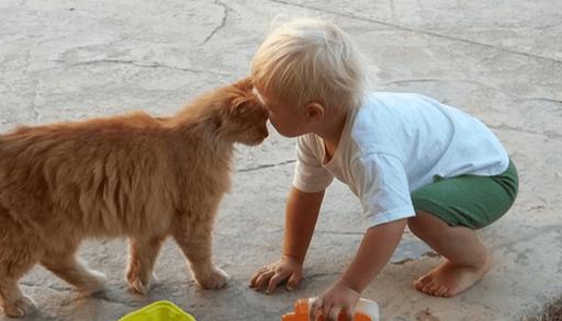 猫に好かれる、猫が好きな子供