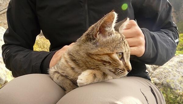 友好度が高いので膝に乗ってくる猫