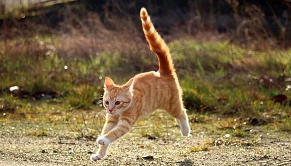 こんな猫の不思議な行動も、真空行動とは