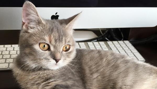 近年は、ペットに関する福利厚生がある会社も増加中