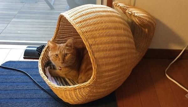 我家のチョビもなんとか猫ちぐらを使ってくれるようになりました
