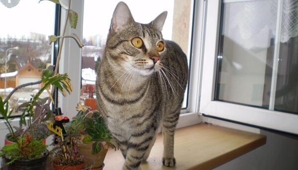 愛猫に健康で長生きしてもらうために完全室内飼いを推奨しています