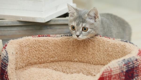 愛猫が猫ベッドを使ってくれない時の対処法とは