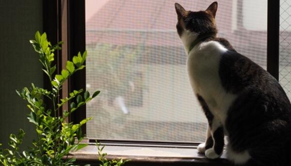 愛猫を完全室内飼いにするためには外に出さないことが肝心