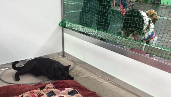 ワンちゃんにも動じない、日本アニマルトラストで保護された猫